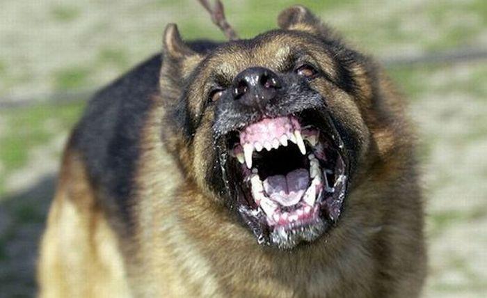 ВБурятии собачка загрызла трёхлетнего ребенка